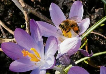 Lehrbienenstand öffnet