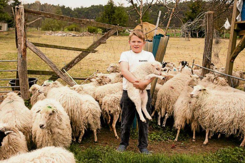 Viel Wolle zum Kuscheln