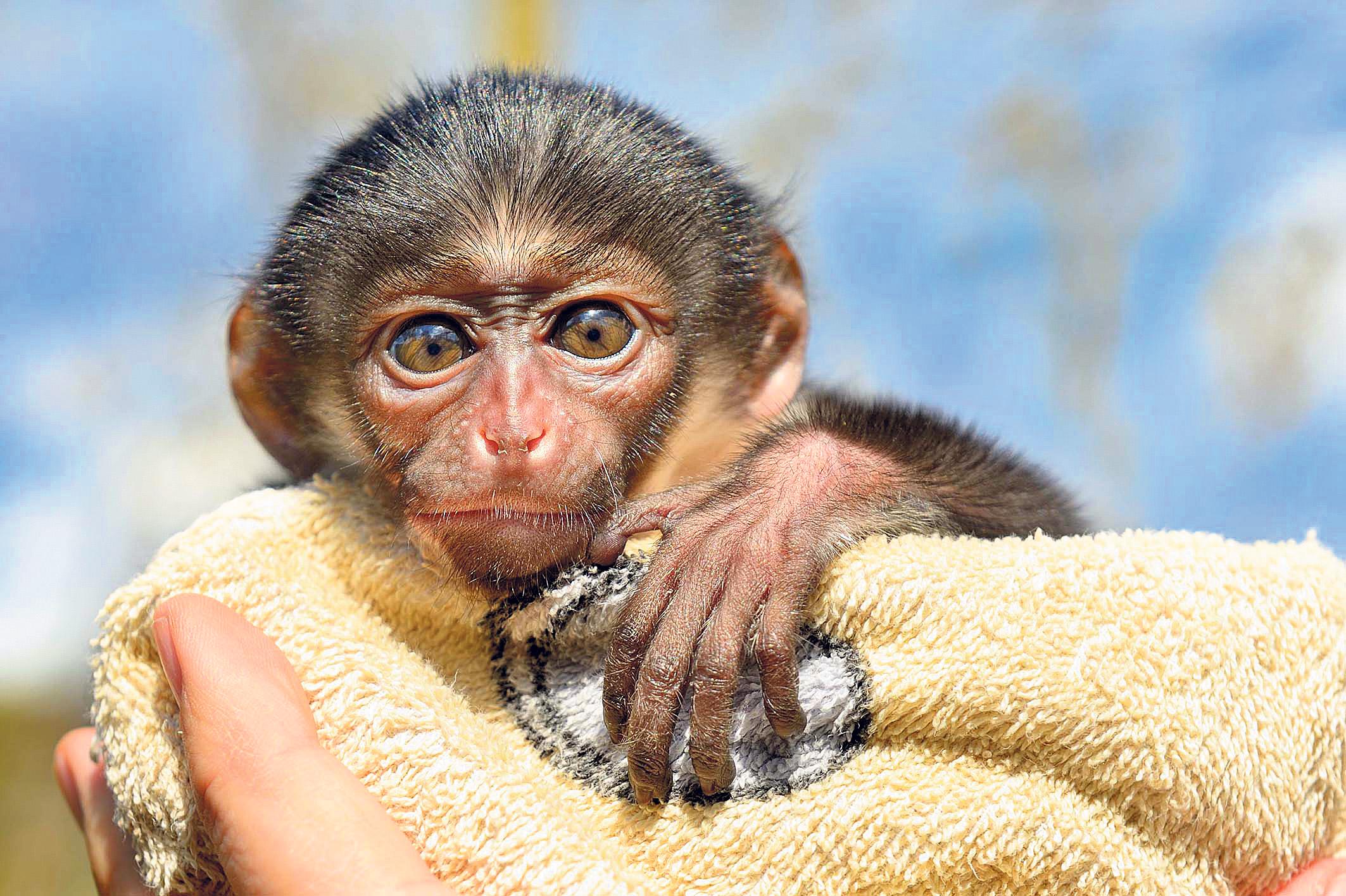 Gebt dem Affen einen Namen!