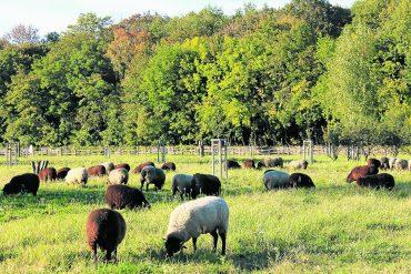 IGA-Premiumfläche: Natur-Comeback in Herzberge