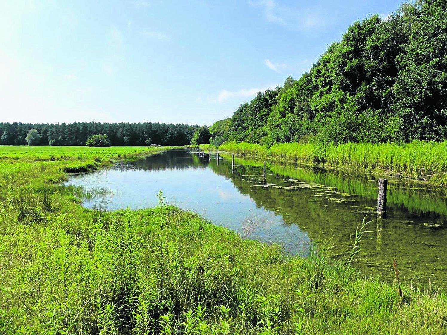 Tag der Artenvielfalt bringt uns Natur näher