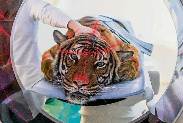 Forschung im Auge des Tigers