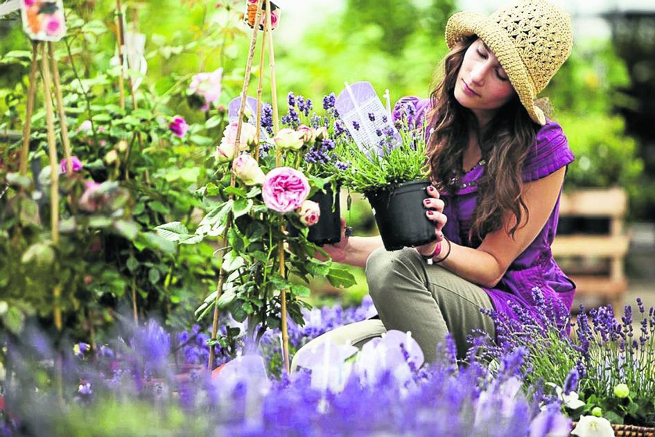 Blühend und betörend