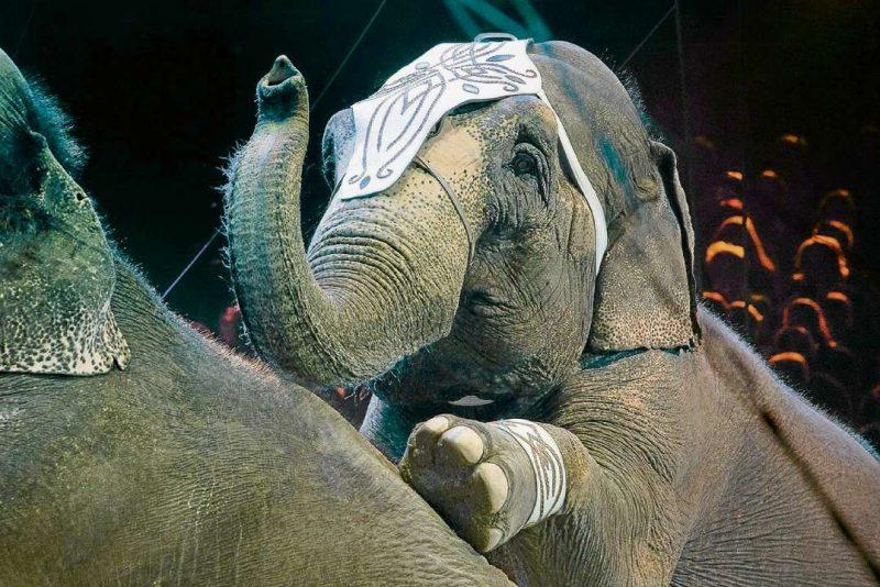 Manege frei ohne Elefanten
