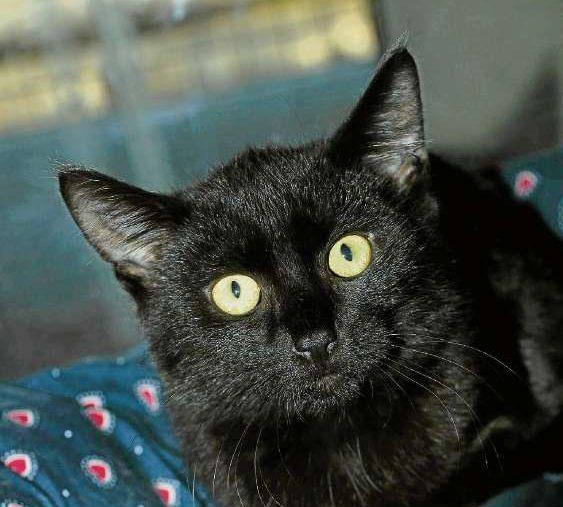 Tag der Katze im Tierschutzheim