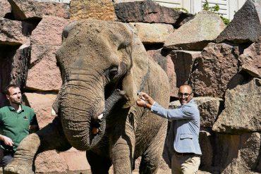 Elefantendame Dashi gestorben