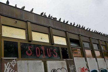 Das Taubenvolk vom Weigel-Platz