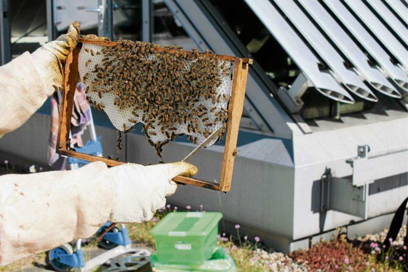 Flotte Bienen  auf dem Finanzamt