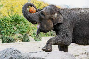 Halloween im Tierpark