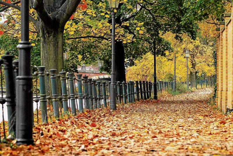 Spenden lassen die Blätter rauschen