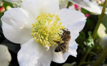 Der Weg zum eigenen Honig