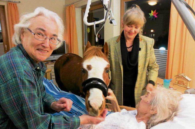 Dr. Pony und seine zärtliche Trost-Therapie