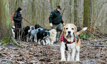 Umbruch im Hundeparadies