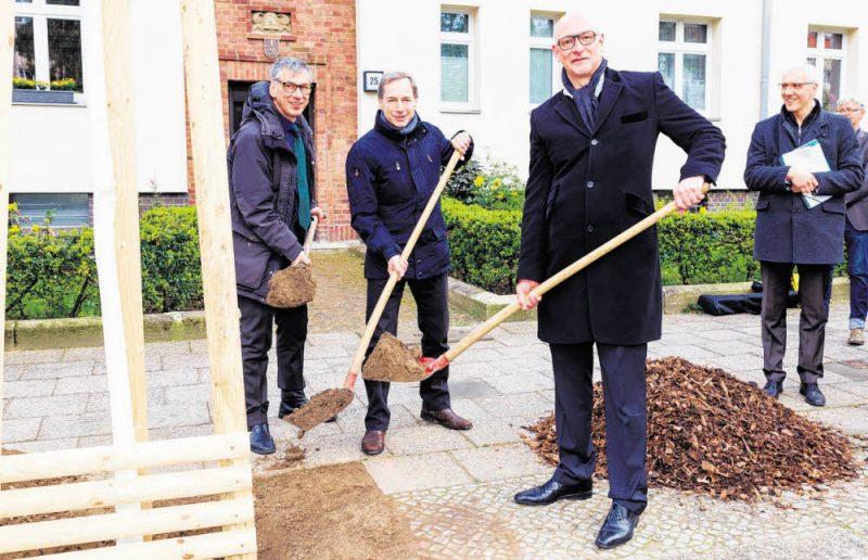 Fünf neue Bäume für ein grünes Pankow