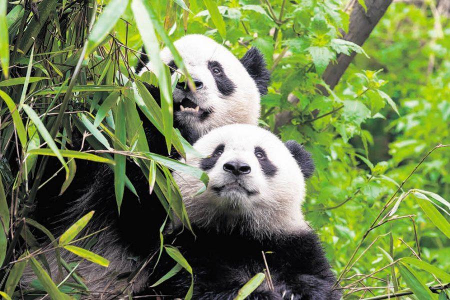 Träumchen und Schätzchen für den Zoo