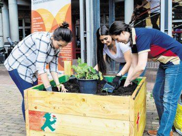 Junge Stadtgärtner erobern Schulgelände