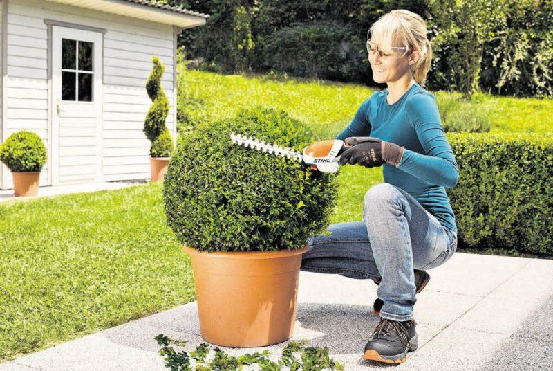 Den Garten in Form halten