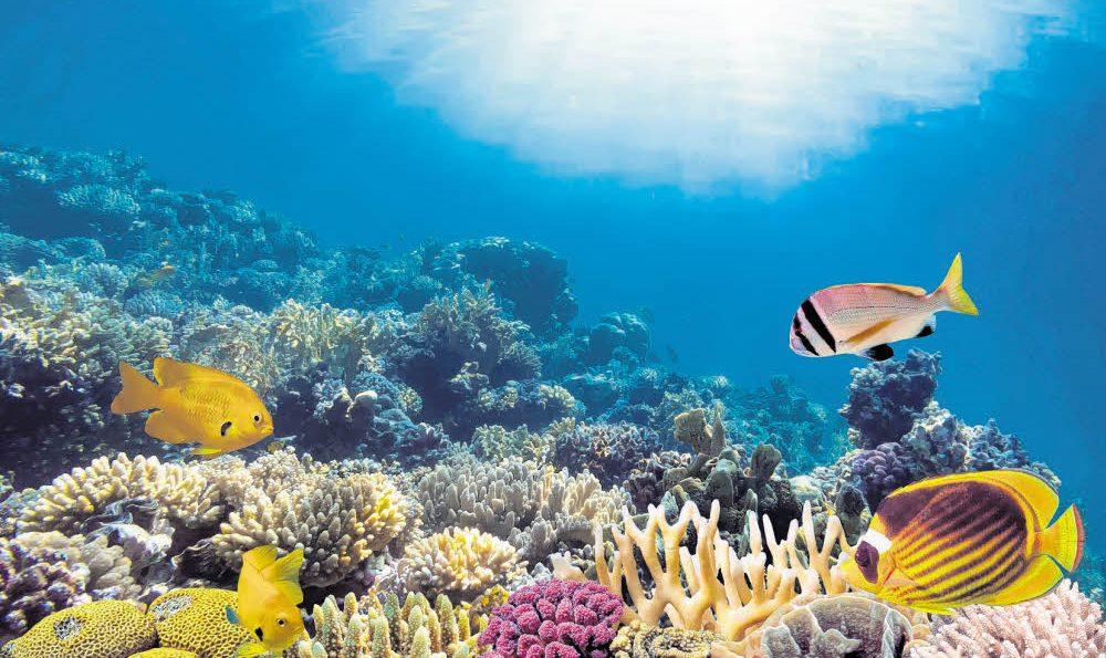 Korallen kommen an die Bucht