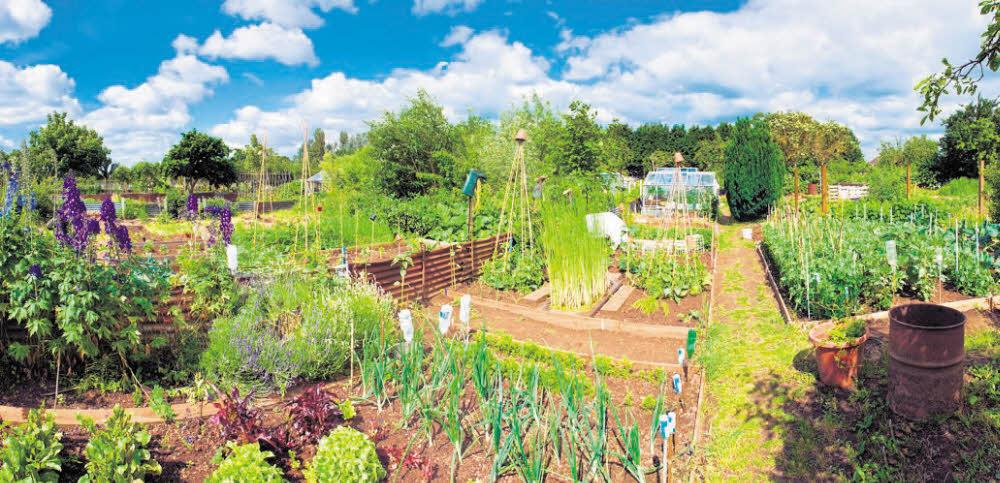 Bezirk plant Kleingarten besser zu schützen
