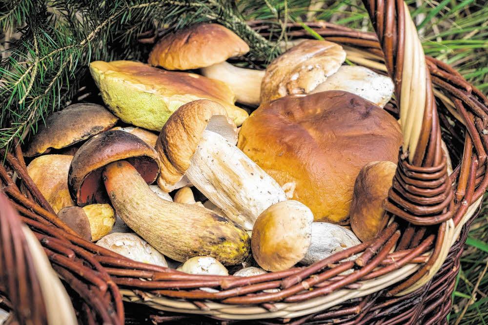 Umsonst und draußen – Ab in die Pilze!
