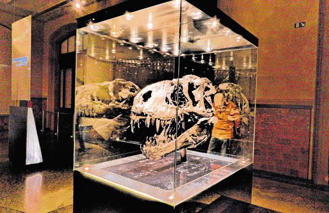 Nachts im Naturkundemuseum