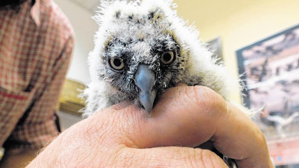 Vogelstation sucht neues Zuhause