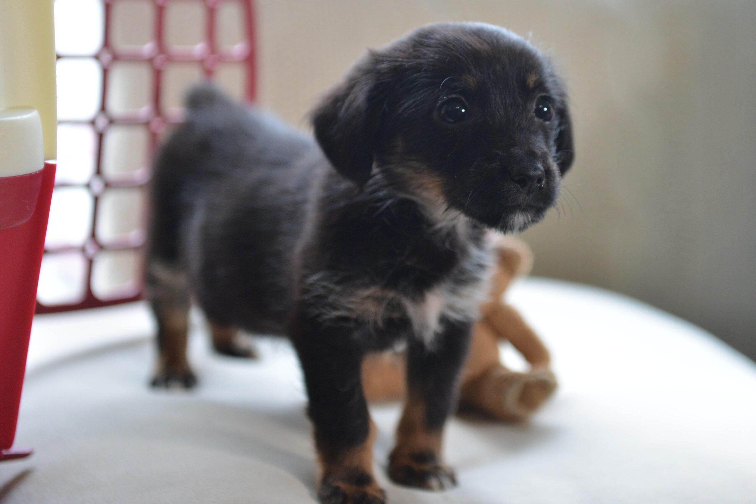 Rosalie zu Gast im Berliner Tierheim