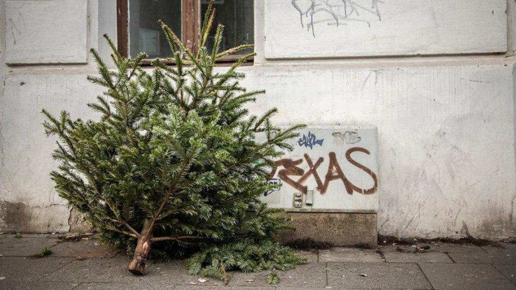 BSR sammelt im Januar Weihnachtsbäume ein