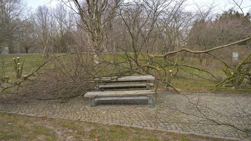 Vandalen fällen Kirschbäume in Gärten der Welt