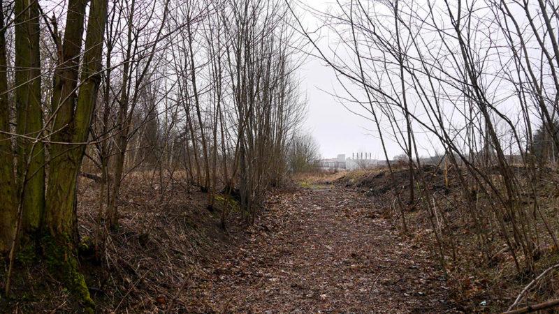 Illegales Abholzen auf dem Rias-Gelände