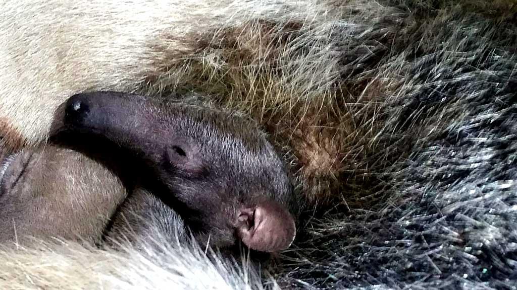 Die süßeste Nase im gesamten Tierpark