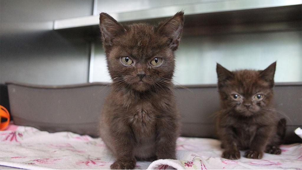 Tierheim rettet 20 kranke Katzen