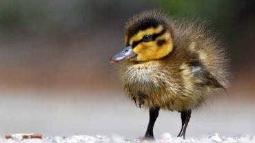 Sorge um Vogel-Paradies am Schäfersee