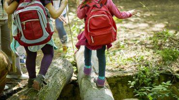 Auf Entdeckungstour im Wald