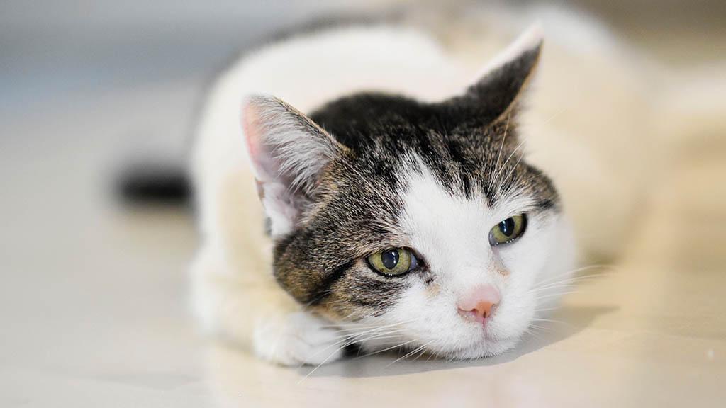 Nach fünf Jahren: Vermisste Katze Lucy ist zurück