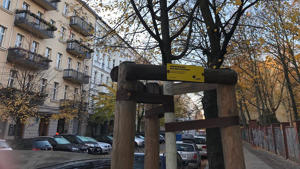 150 neue Bäume für Pankow