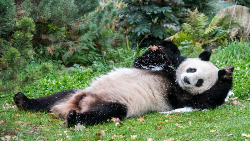 Winterstimmung in Zoo und Tierpark