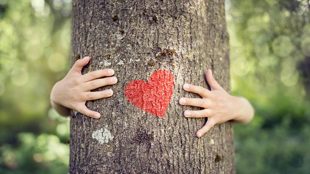 Menschen mit Herz für Bäume gesucht