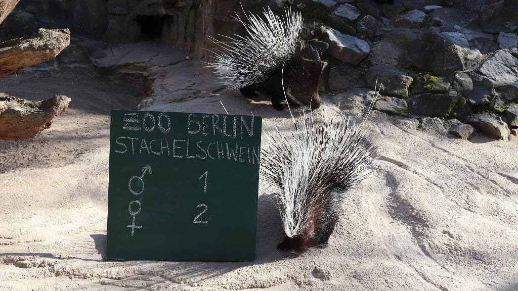 Inventur in Zoo und Tierpark