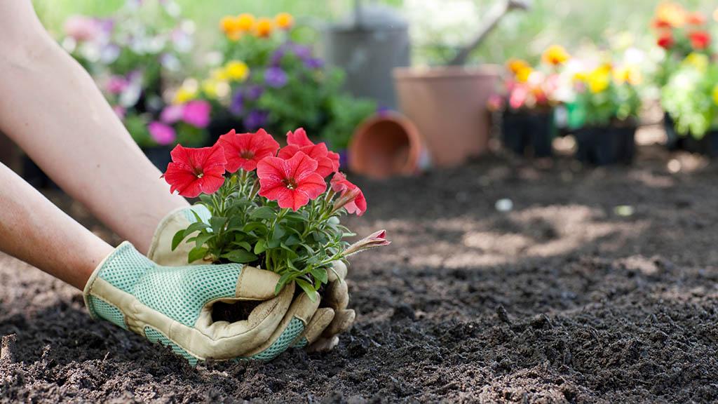 Urban-Gardening-Projekt feiert Saisonstart