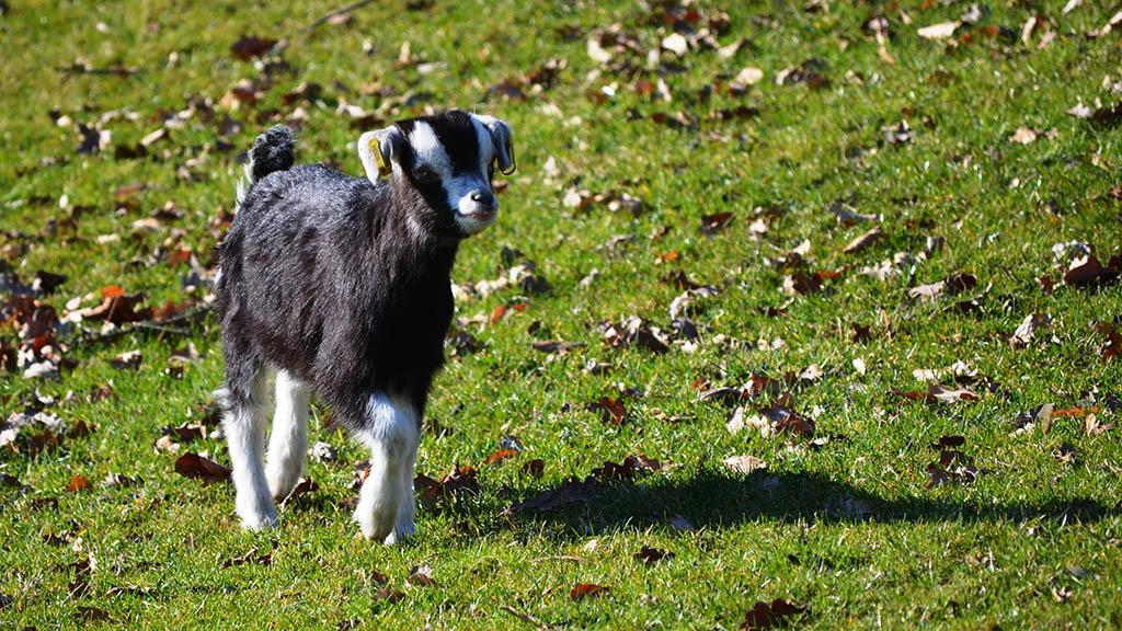 Süße Tierbabys im Britzer Garten