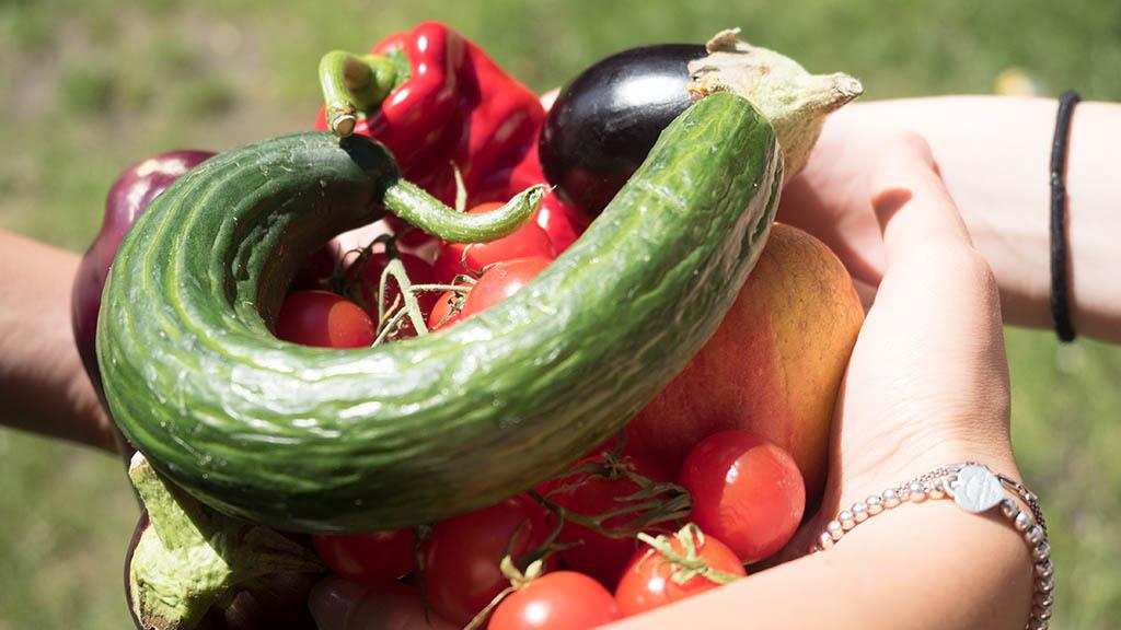 Neukölln: Neuer Markt für gerettete Lebensmittel