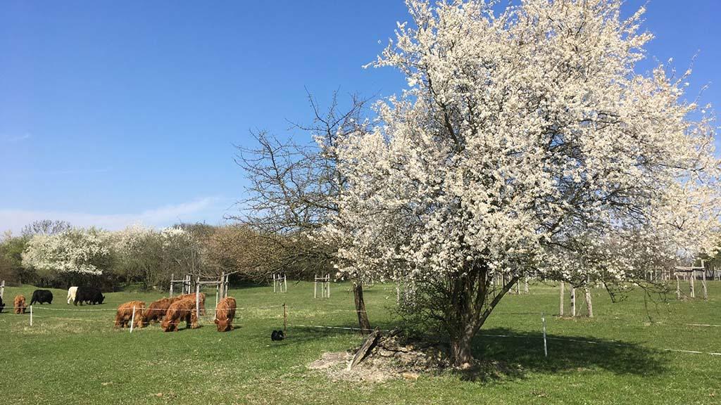 Frühlingswanderung durch die Falkenberger Feldmark