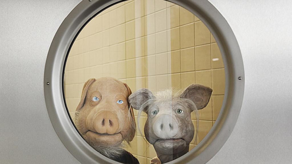 Ein schweinisches Fest und eine lange Nacht