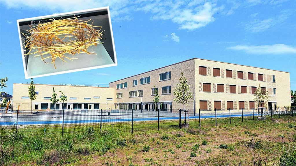 Goldschatz aus Schule gestohlen