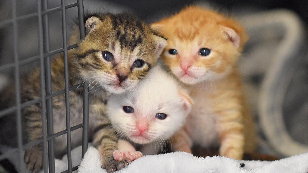 Großes Glück für Fred, Ferdi und Feline