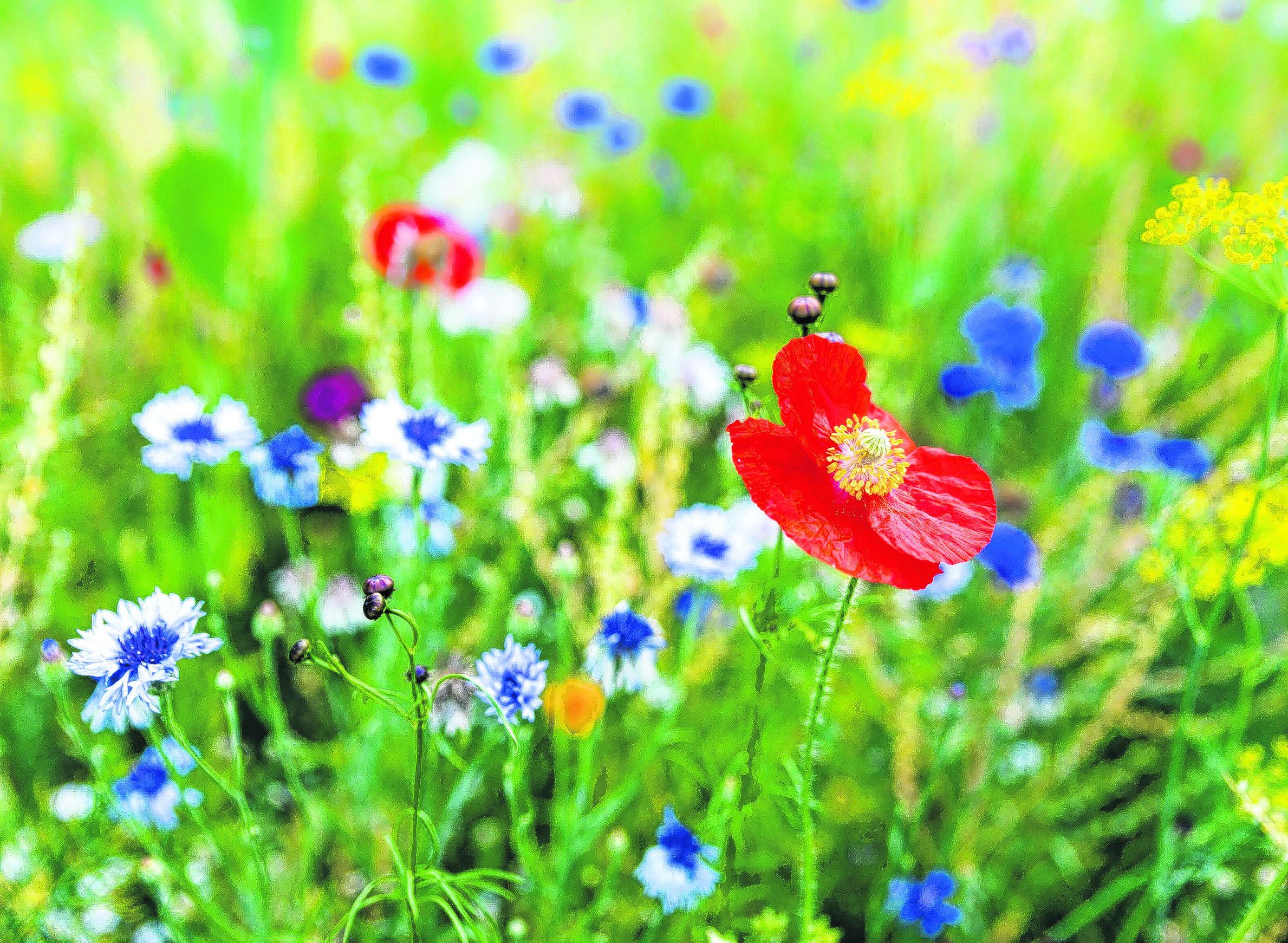Lichtenberg lässt seine Blumen blühen
