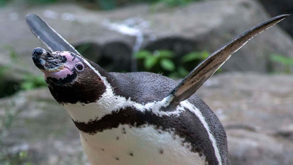 Unwetterwarnung – Zoo und Tierpark bleiben geschlossen