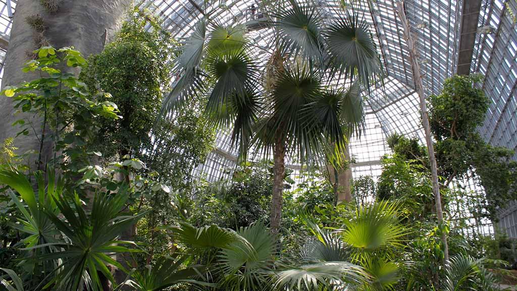 Berlin-Dahlem: Botanischer Garten startet mit großen Namen ins neue Jahr