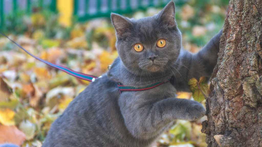 Killer auf Samtpfoten? Forscher fordern Leinenpflicht für Katzen